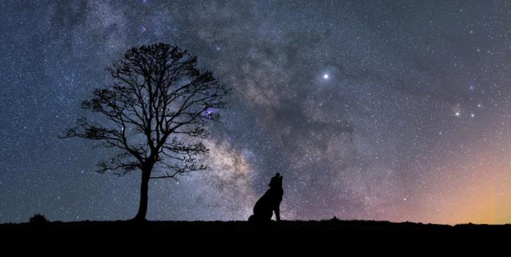Wilk na tle nocnego nieba